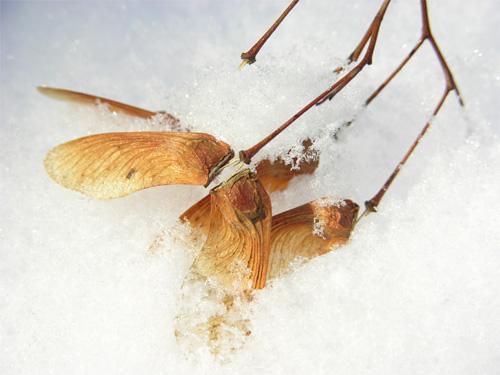 雪に枯れ枝